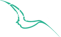 SA-Collective-Logo-updated-refined